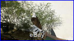 Chainsaw carved Eagle FOLK WOOD Carving Rustic Cabin Statue SCULPTURE