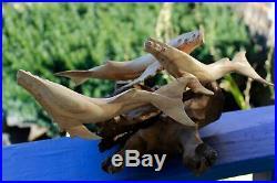 Humpback Whale Pod Sculpture Marine Life Handmade Parasite Wood carving Statue